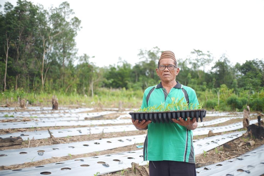 Pertanian Cabai Untuk Meningkatkan Hasil Komoditas Desa Petaling